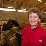 - Påstander om høyt kraftfôrforbruk hos norske ammekyr er overdrevet