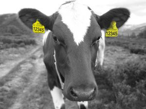 Nye øremerker og dyreholds ID